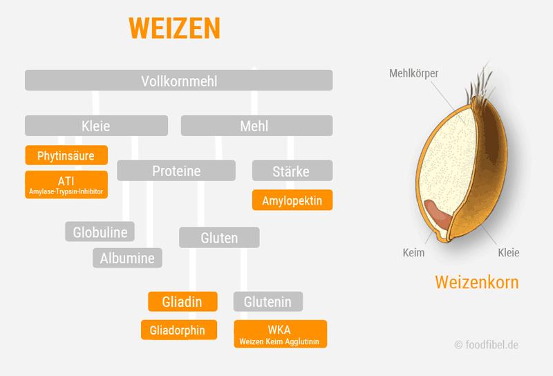 Abbildung: Weizenkorn und Inhaltsstoffe Gluten, Gliadin und Amylopektin