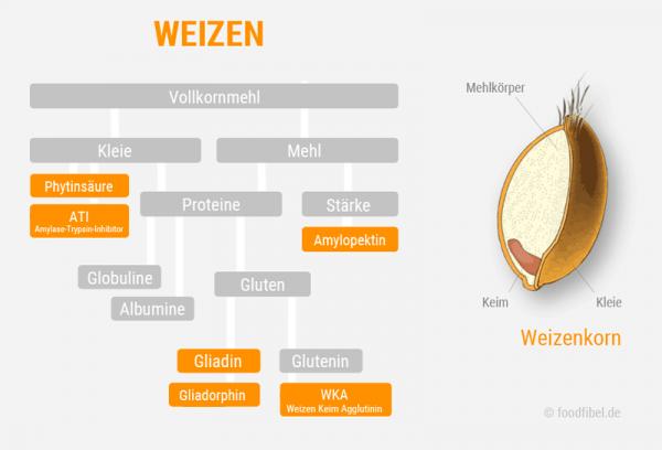 Schaubild: Weizen und seine ungesunden Inhaltsstoffe. © foodfibel.de, eigenes Werk.