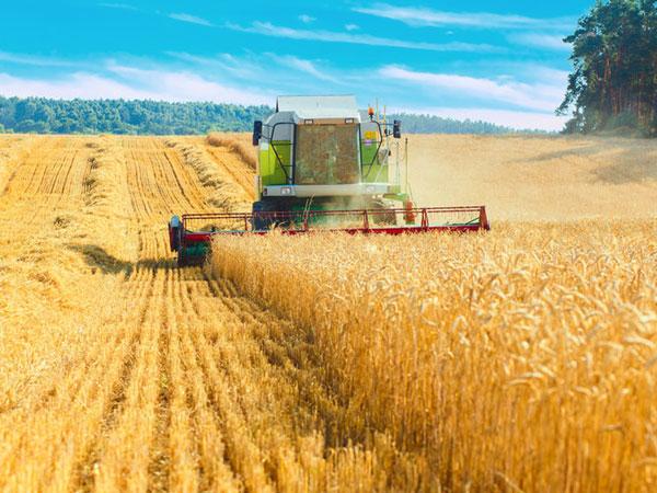 Ernte auf einem Getreidefeld mit Mähdrescher. Mähdrescher arbeiten auf einem Weizenfeld, © aksakalko, 123rf.com.
