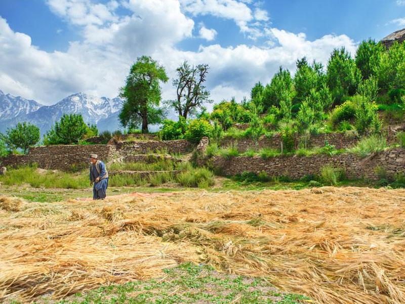 Getreideernte. Frau trocknet Weizen, © anatols, #19093349 123rf.com .