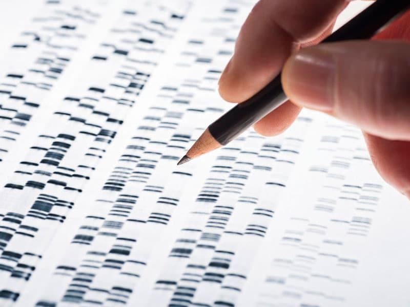 Gentest, Basensequenz ablesen. Die Wissenschaftler untersuchten DNA-Gel, © gopixa , #37239059 123rfcom .