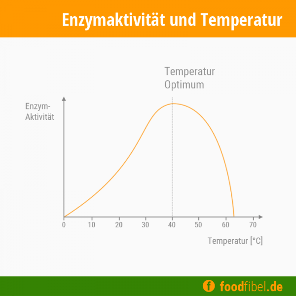 Abbildung: Kurvendiadramm der Enzymaktivität in Abhängigkeit von der Temperatur. © foodfibel.de, eigenes Werk.