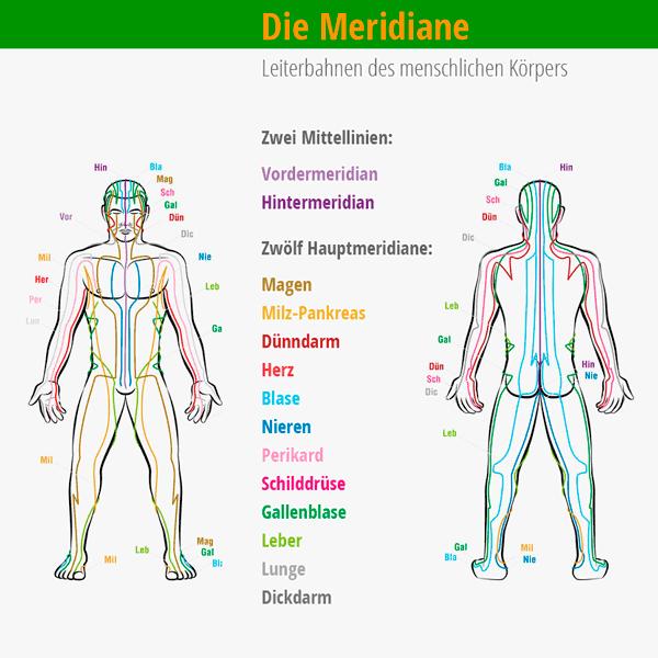 Die Meridiane des menschlichen Körpers sind ihre Organe. © Peter Hermes Furian  123rf.com