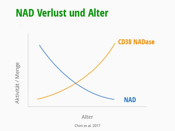 NAD Verlust im Altert. Diagramm NAD und CD38. Chini et al. 2017. © foodfibel.de, eigenes Werk.