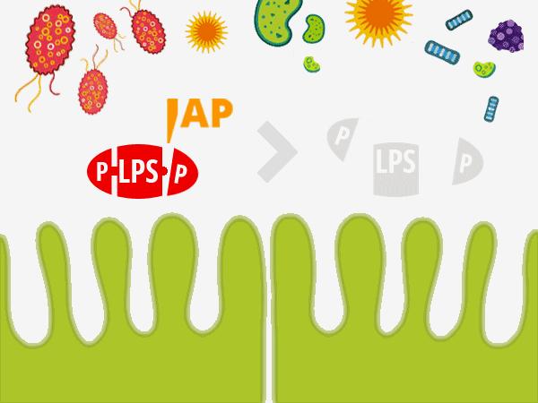 Spaltung von LPS durch IAP. © foodfibel.de, eiegens Werk.