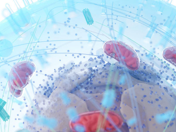 Zelle mit Mitochondrien. ©  Sebastian Kaulitzki 123rf.com.